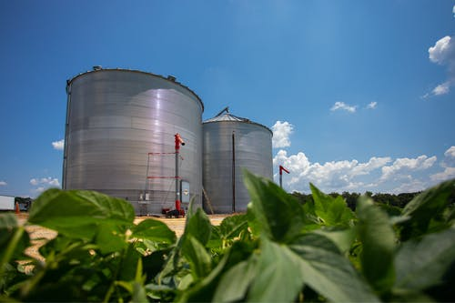 คลังภาพถ่ายฟรี ของ agbiopix, การเกษตร, ถัง, ถั่วเหลือง