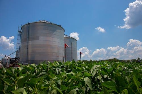คลังภาพถ่ายฟรี ของ agbiopix, sllo, การเกษตร, ถัง