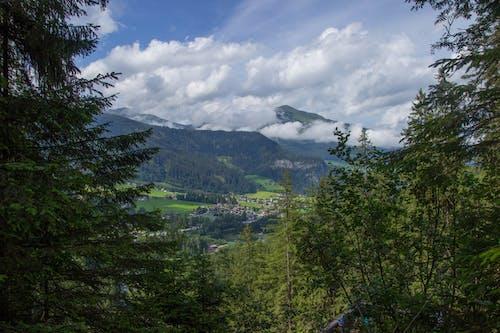 Бесплатное стоковое фото с Австрия, вид, деревья