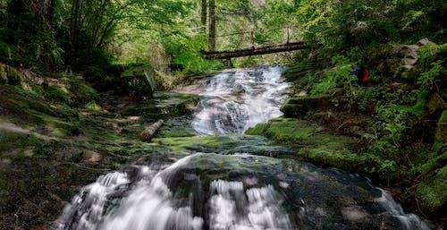 Free stock photo of adventure, bridge, forest