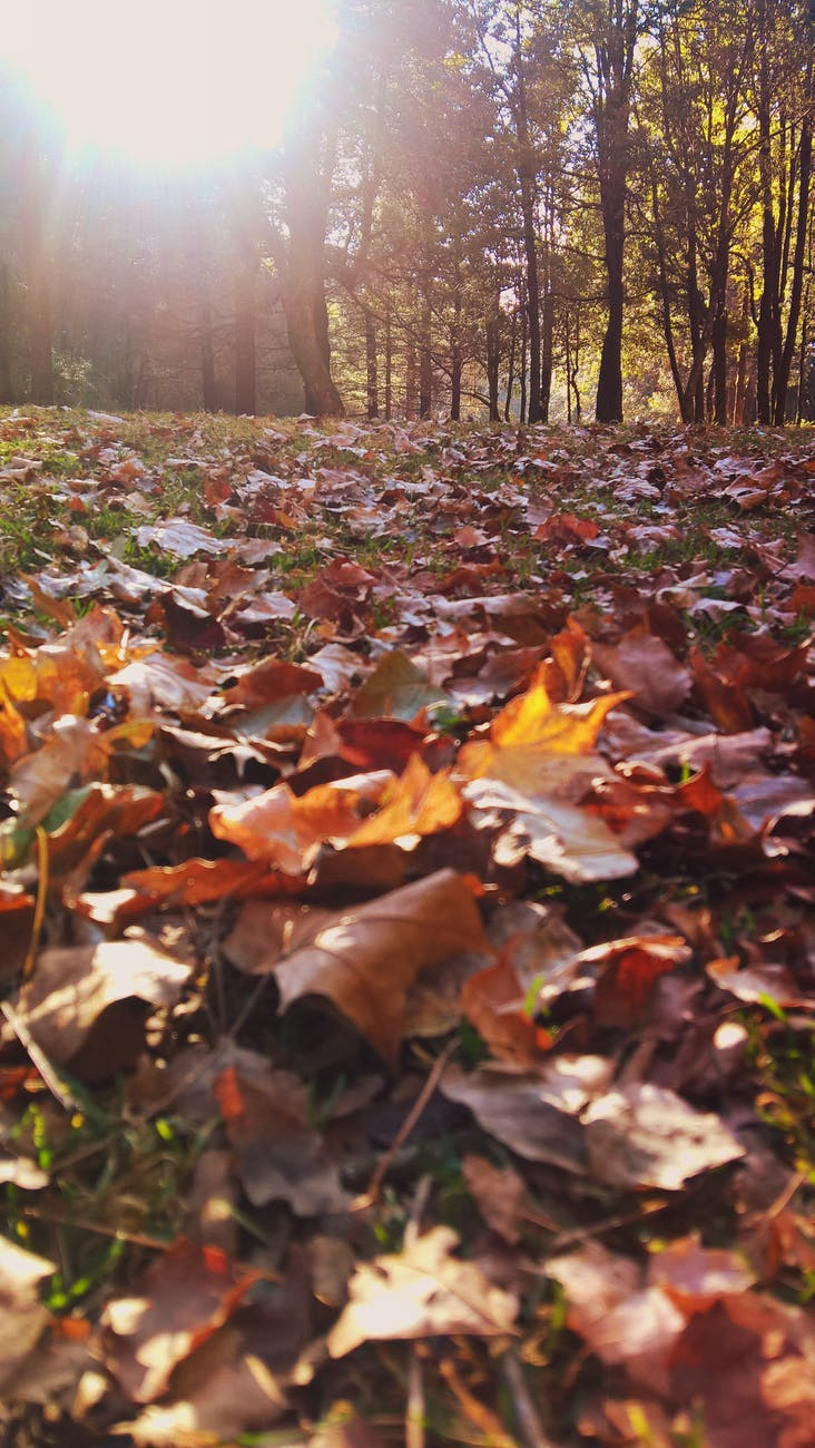 Leaves | Composting 101: What is Composting | http://gardenseason.com/composting-101-what-is-composting/