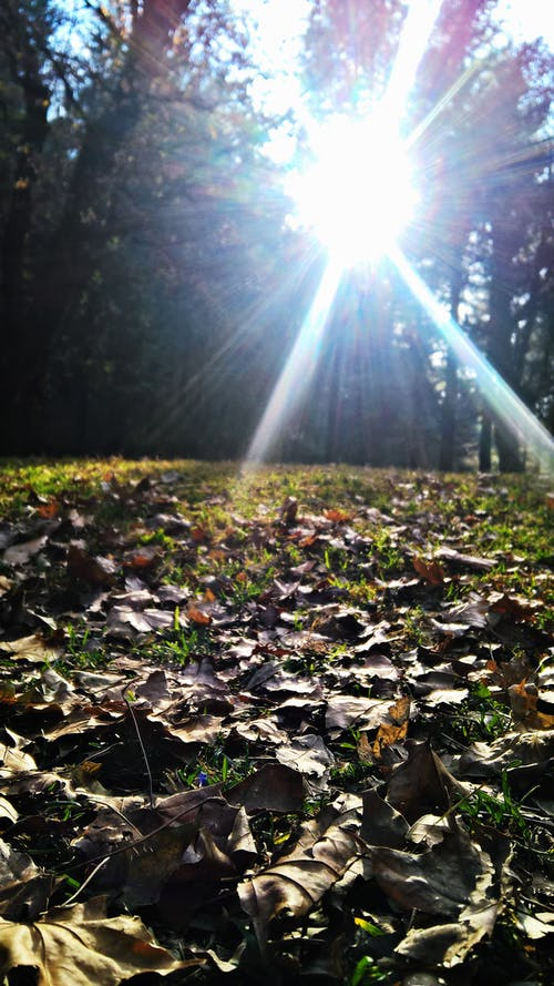 Free stock photo of forest cover, sunrays