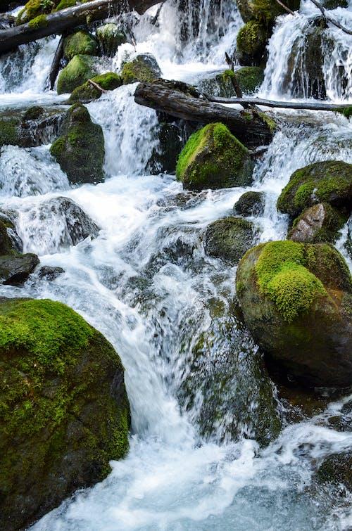 깨끗한 물, 반짝이는, 숲, 이끼의 무료 스톡 사진