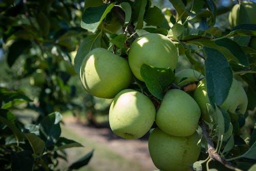 คลังภาพถ่ายฟรี ของ agbiopix, การเกษตร, ทาร์ต, น่ากิน