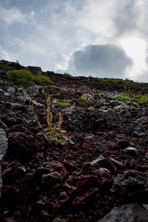 Foto d'estoc gratuïta de Islàndia, roques, Roques molsoses