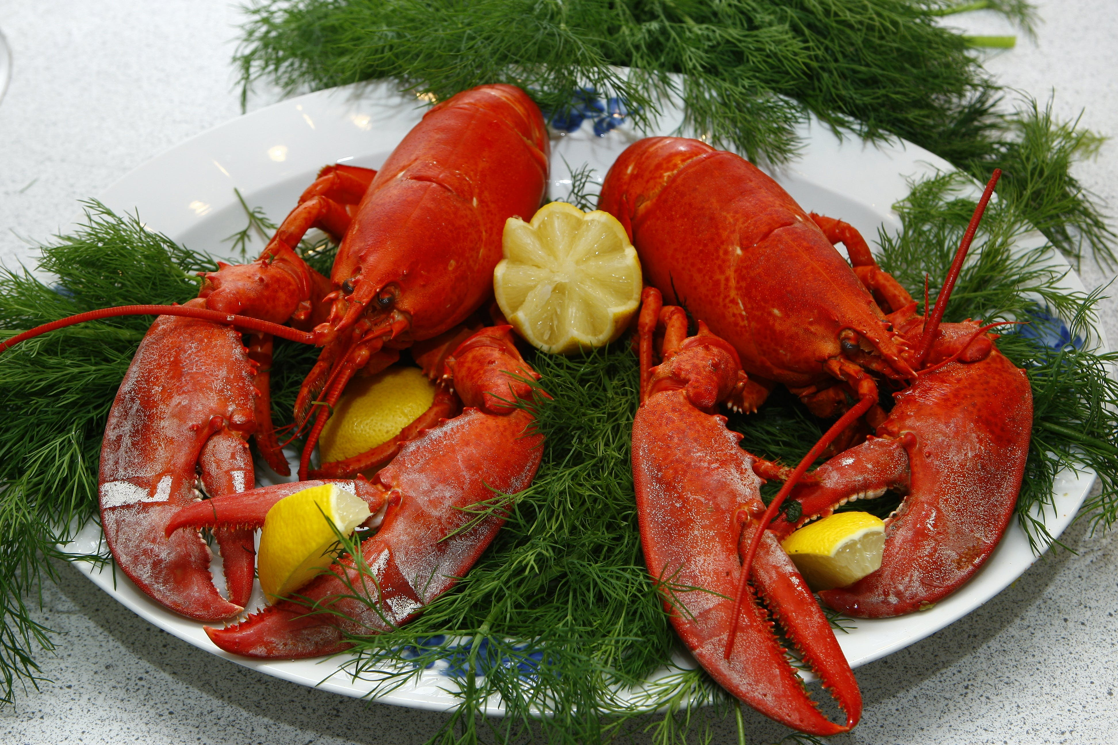 Free stock photo of food, lobster, lemon, dill