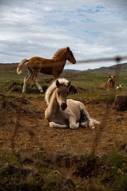 Foto stok gratis bidang, di luar rumah, hewan menyusui, kehidupan liar