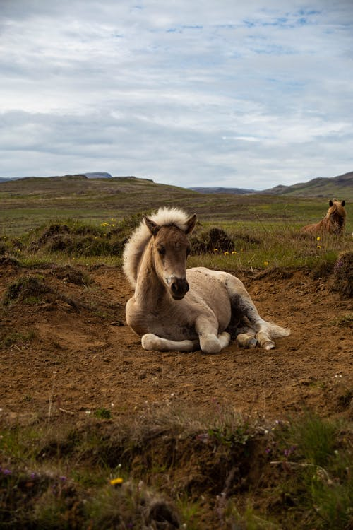 Fotos de stock gratuitas de Acostado, al aire libre, animal, caballería