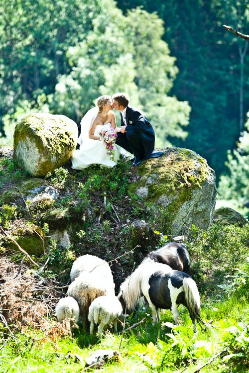 Couple Kissing on Top of Rock Near Goats
