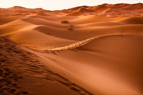 Immagine gratuita di alba, attraente, caldo, deserto