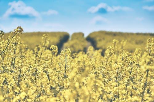 Foto d'estoc gratuïta de arable, bonic, borrós, camp