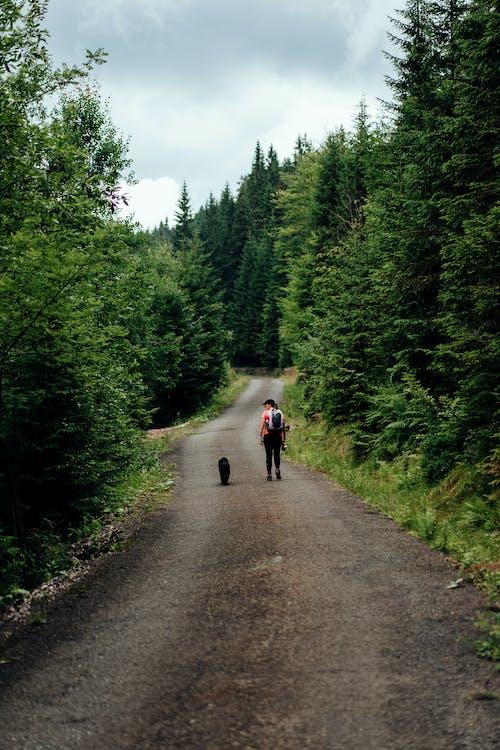 Person Walking in Road