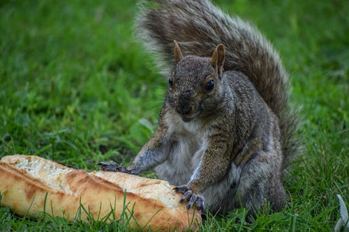 Free stock photo of Adobe Photoshop, animal, baguette, bred