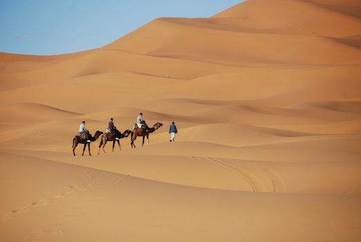 Free stock photo of sand, desert, camel, dunes