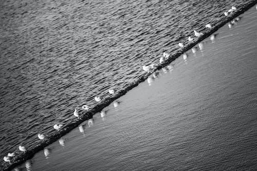 Free stock photo of birds, creek, seagulls, water