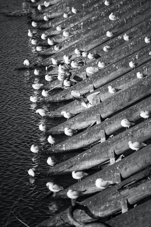 Fotobanka sbezplatnými fotkami na tému Praha, vlnolamy, vodné vtáky, vtáky