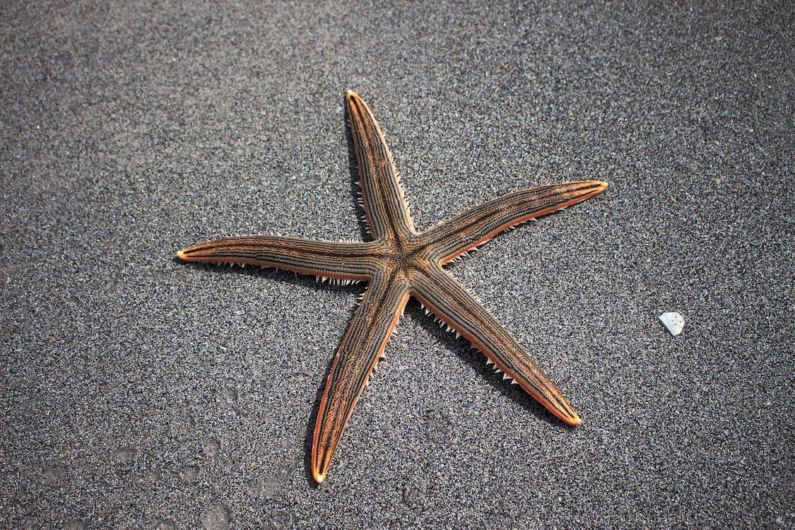 bintang laut, echinoderm, fauna laut