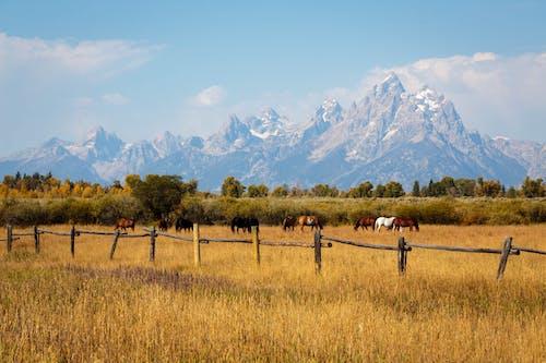 Gratis lagerfoto af bane, bjerg, dagslys, dyrefotografering