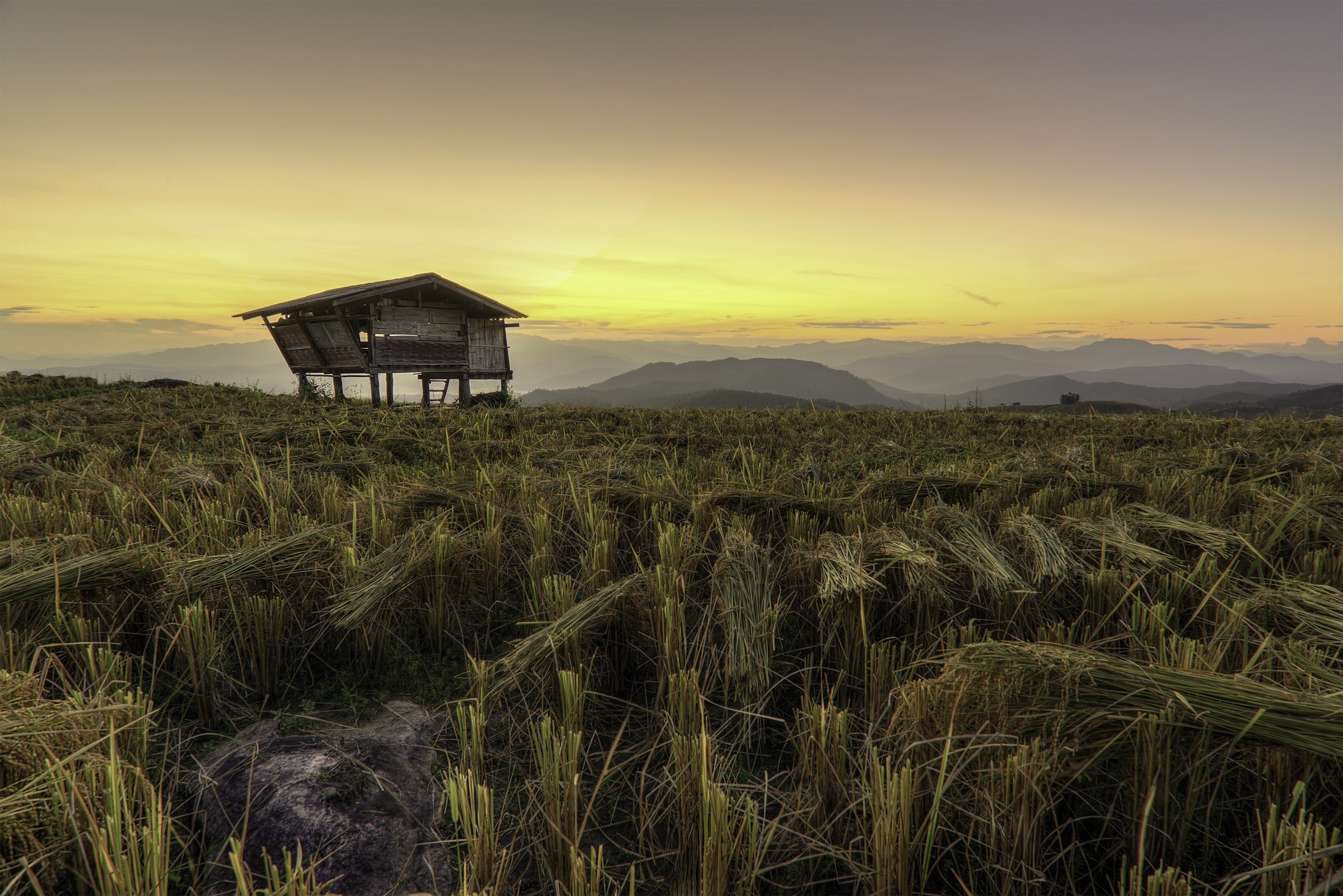 agriculture, asia, barn