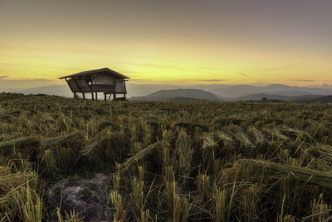 alba, Àsia, blat