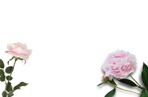 Darmowe zdjęcie z galerii z flaylay, kwiaty, różowy, stylizowane zapasy