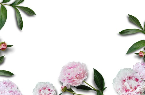 Free stock photo of flatlay, flowers, pink, styled stock
