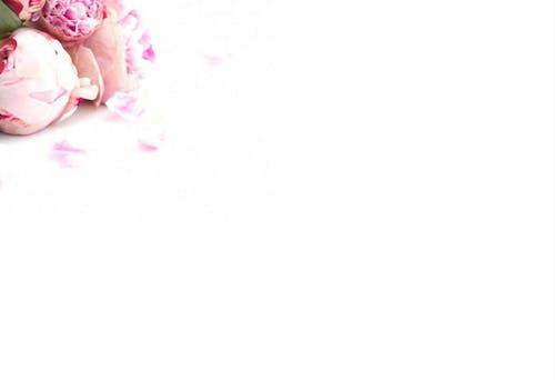 Darmowe zdjęcie z galerii z kwiaty, płaszczyzna, różowy, stylizowane zapasy