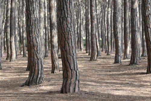Free stock photo of tree, wild, wood