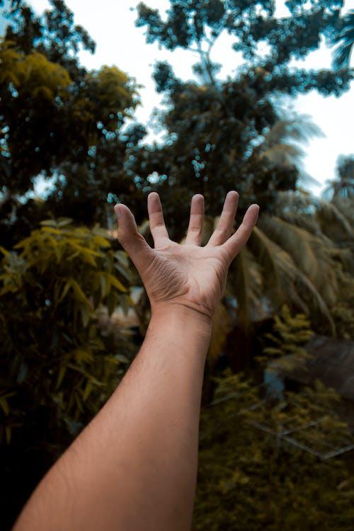 Imagine de stoc gratuită din mână, natură, natura fundal
