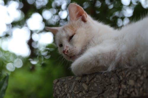 흰 고양이의 무료 스톡 사진