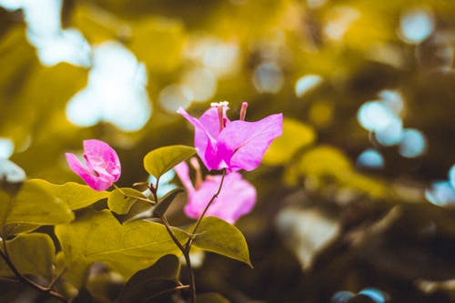 Free stock photo of 4k wallpaper, beauty in nature, blur, close up