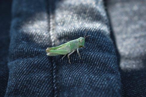 Foto stok gratis alam, belalang, gelap, hijau