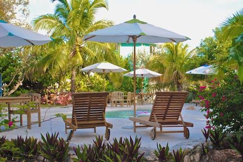 Základová fotografie zdarma na téma deštník, dovolená, exotický, hotel