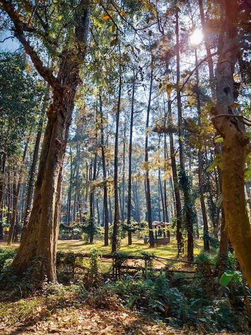 Ingyenes stockfotó erdő, faágak, fák, fatörzsek témában