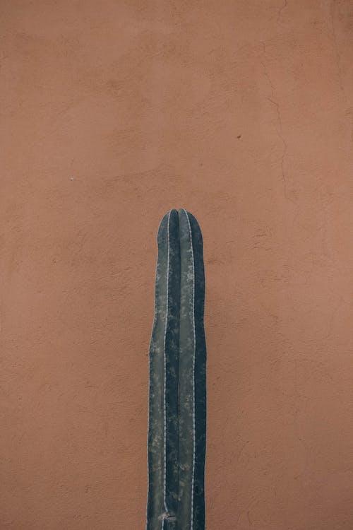 Безкоштовне стокове фото на тему «бетон, завод, кактус, колір»