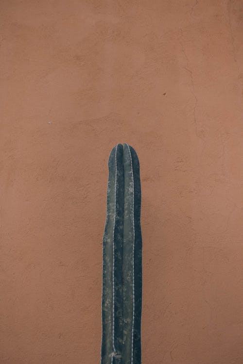 Gratis lagerfoto af baggrund, beton, brun baggrund, farve