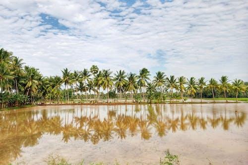 Darmowe zdjęcie z galerii z drzewa kokosowe, odbicie