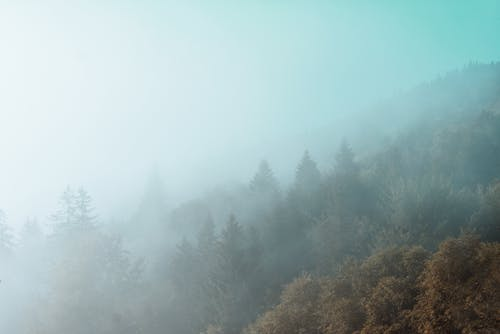 Foto profissional grátis de ao ar livre, árvores, cenário, cênico
