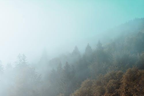 Gratis stockfoto met berg, bird's eye view, bomen, Bos