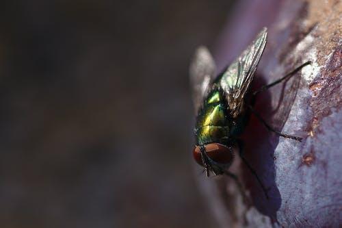 Ảnh lưu trữ miễn phí về một con ruồi xanh trên trái cây