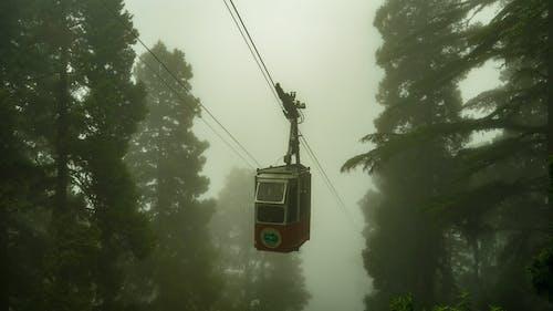 감기, 교통, 교통체계, 나무의 무료 스톡 사진