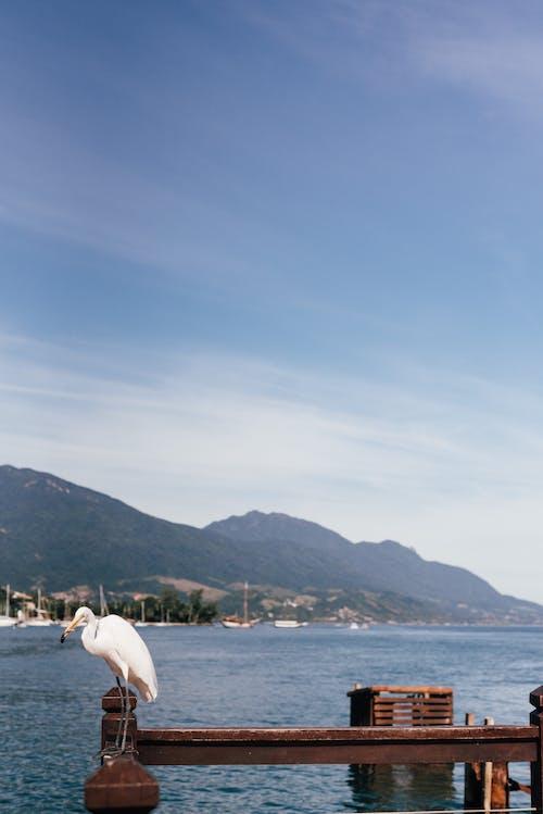 Foto d'estoc gratuïta de blau, blau cel, martinet