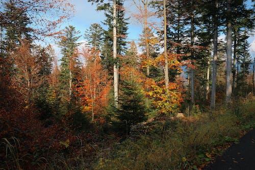 Free stock photo of autumn, fall, fall colors
