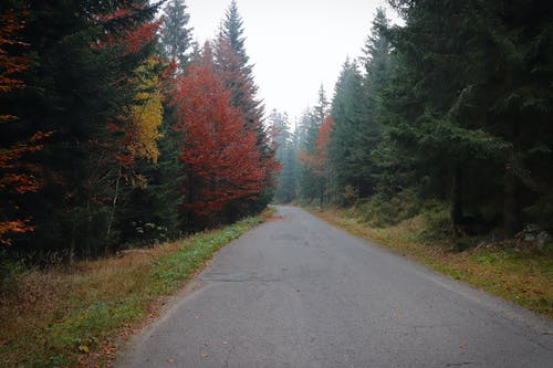 Free stock photo of fall, forest, road