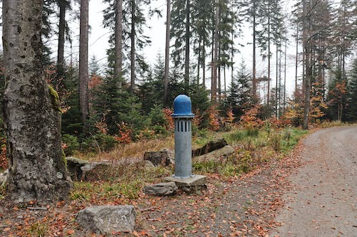Free stock photo of fall, forest, pump