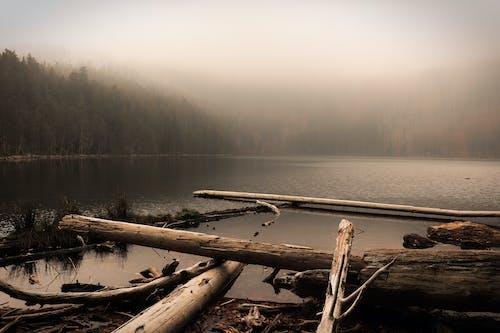 Free stock photo of foggy, lake, wood