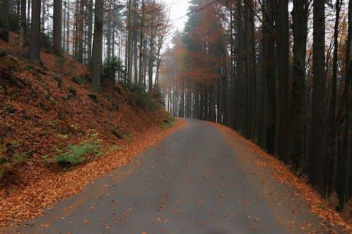 Free stock photo of fall, fall leaves, orange