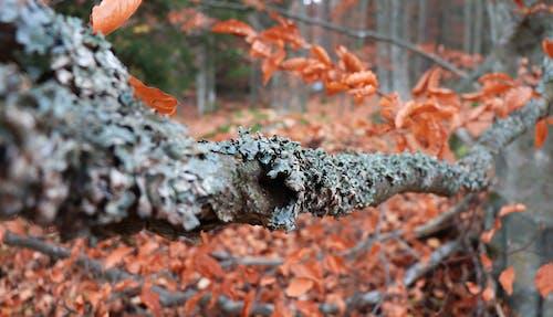 Free stock photo of fall, lichen, orange