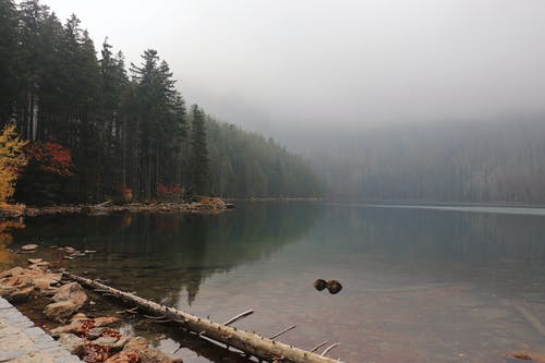 Free stock photo of foggy, forest, lake
