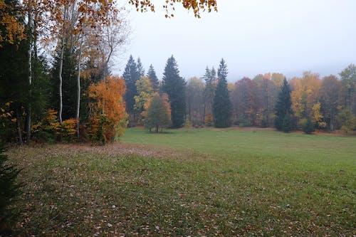 Free stock photo of fall, fall colors, foggy